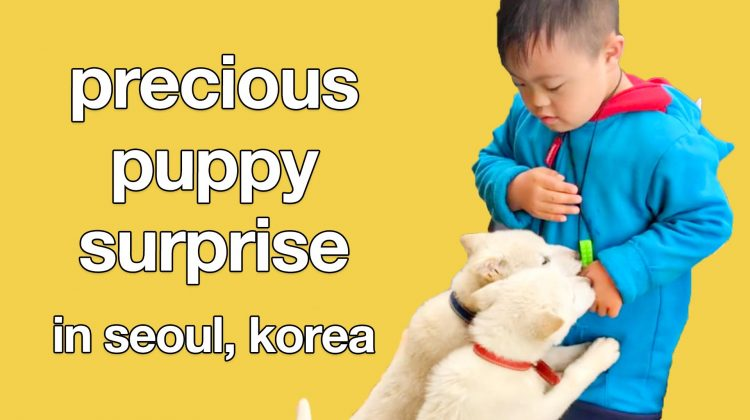 youtube-puppies-happy-make-you-smile-video